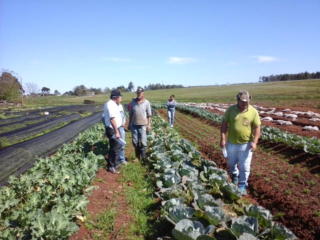 assentados driblam uso de agrotóxicos e investem na produção orgânica
