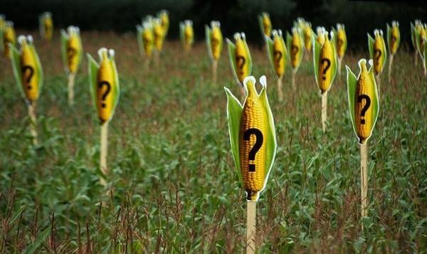 Papa apoia ativistas argentinos em processo contra Monsanto