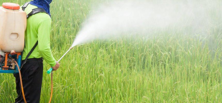 Agrotóxicos: veneno na mesa dos cariocas