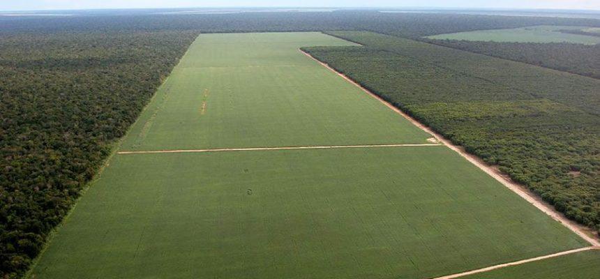 Bancada ruralista: legalizar para rentabilizar a terra