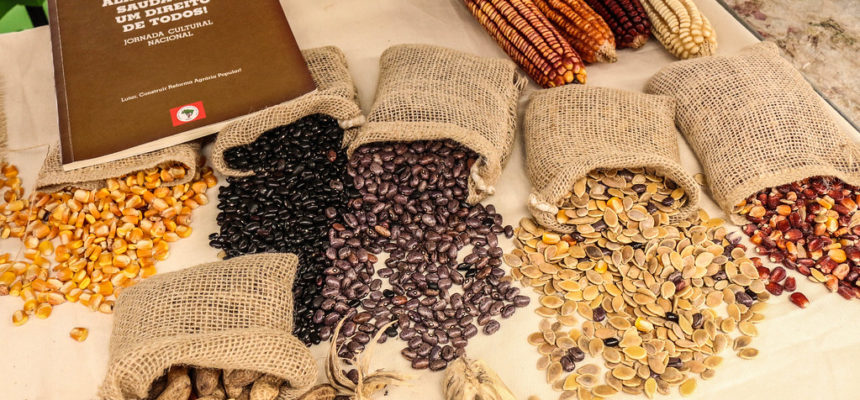 BioNatur celebra 20 anos de resistência na produção de sementes agroecológicas