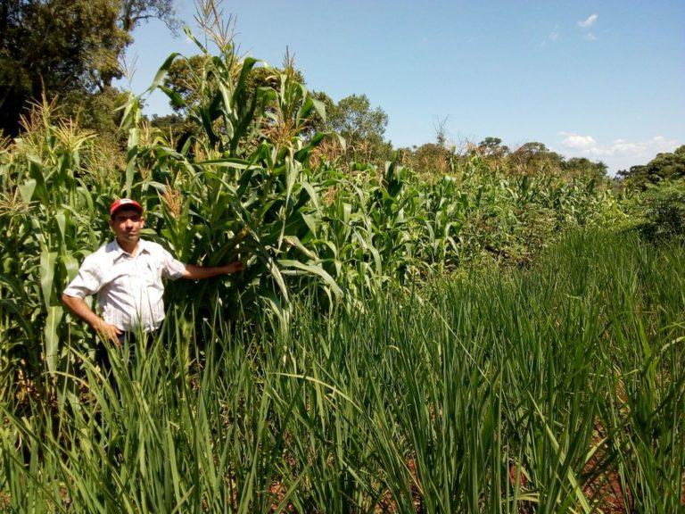 Produção agroecológica avança na região Centro do Paraná