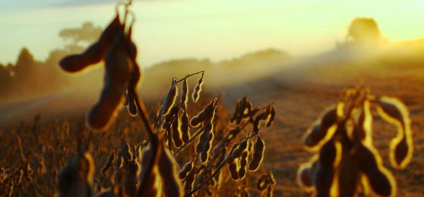 Tiros na lavoura de soja