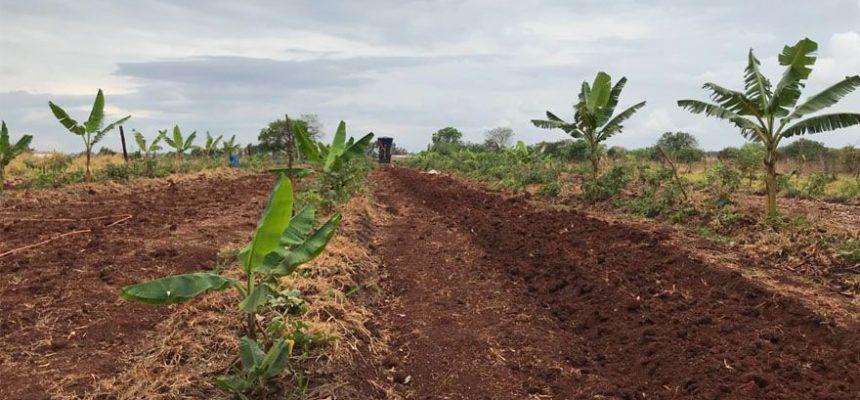 The Guardian: A revolução agroecológica do MST