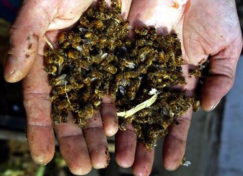 Mortandade de abelhas: MP diz que encaminhará providências junto ao governo do Estado do RS