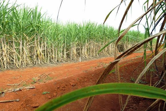 Projeto que libera cultivo de cana-de-açúcar na Amazônia afeta meio ambiente