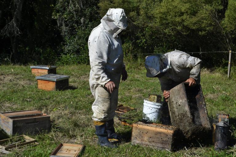 """nós continuaremos apostando na apicultura"""""""