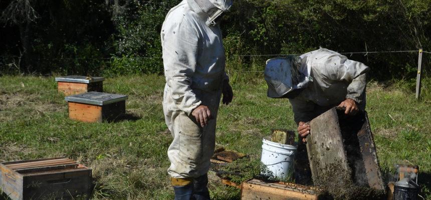 """Desafios da produção sem veneno: """"Até quando tivermos condições, nós continuaremos apostando na apicultura"""", diz assentado"""
