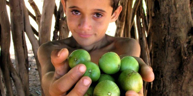 O fruto da árvore sagrada do sertão, o umbu, poderá ser encontrado na Feira