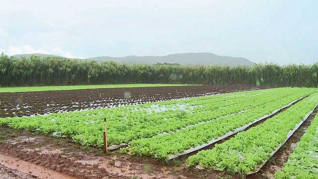 PL que substitui Lei dos Agrotóxicos representa retrocesso, dizem pesquisadores