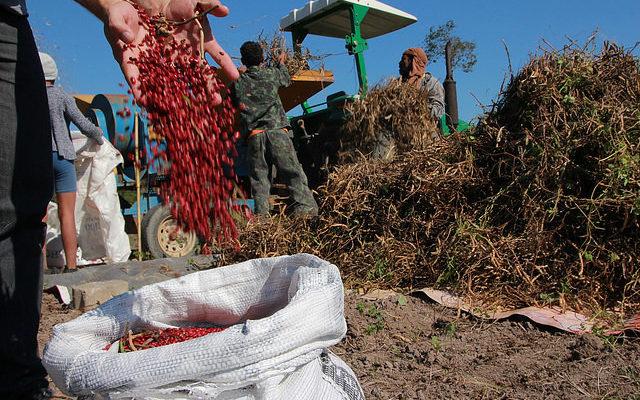 Opinião: O golpe ruralista e o preço do feijão