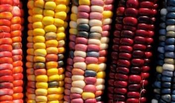 Vandana Shiva: Batalha das Sementes e as ameaças da Monsanto contra a Natureza