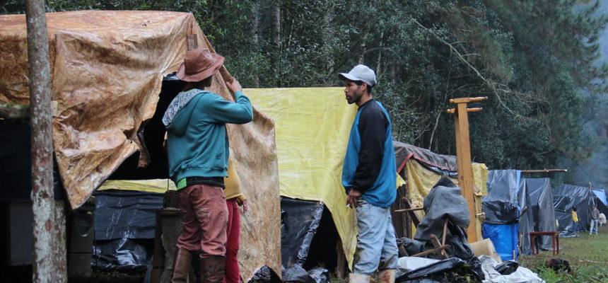 MST ocupa reserva ambiental de Pinos, em Santa Catarina