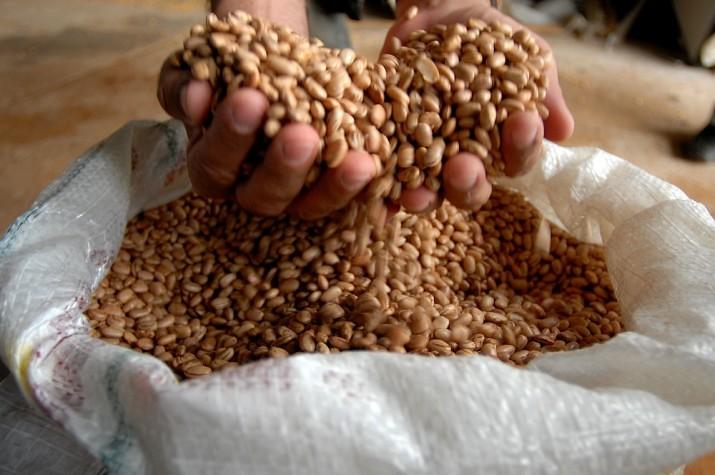 Priorização da soja e outras commodities eleva preço do feijão