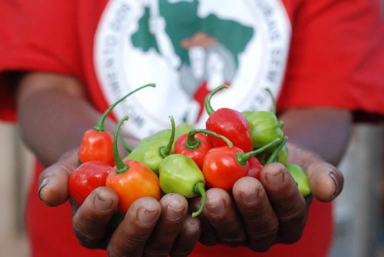 MST vai inserir o tema da agroecologia na educação básica das escolas do campo