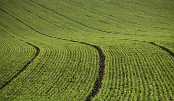 Venda de terras para estrangeiros: ameaça à soberania nacional e ao acesso à terra