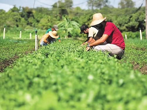 """""""Os fatores que a agroecologia possibilita são elementos para efetivação de direitos humanos"""""""