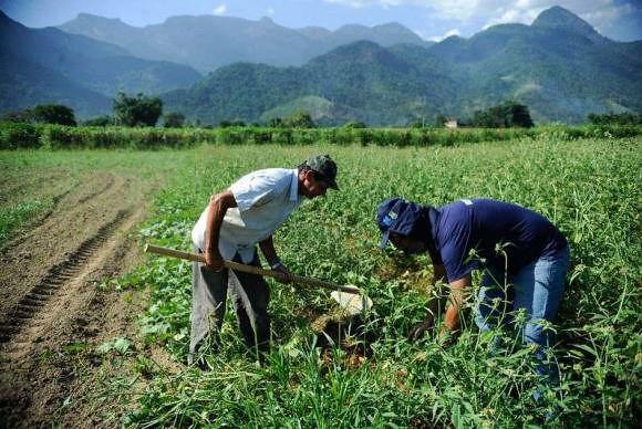 """Agricultura camponesa: """"Não há democracia sem direito à alimentação"""""""