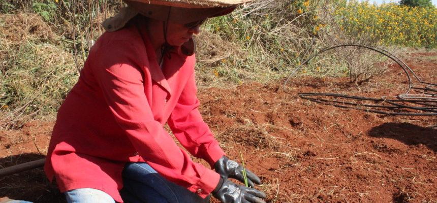 Cooperativa de mulheres, organizada pelo MST, produz ervas medicinais orgânicas