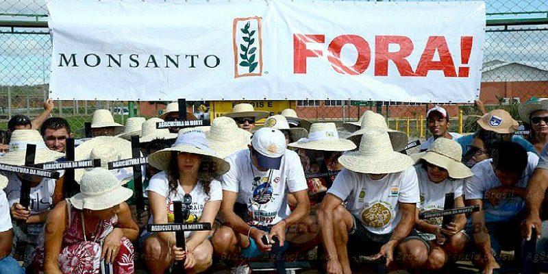 Fusão entre Bayer e Monsanto deve agravar insegurança alimentar no Brasil