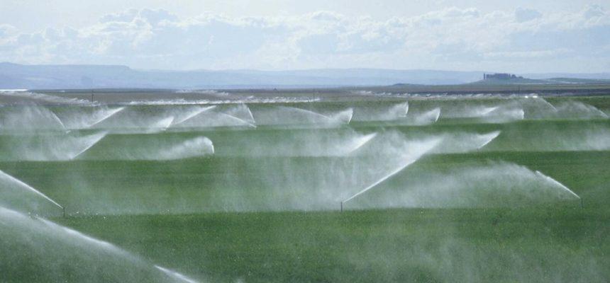 88 mil litros de calda tóxica são utilizados todas as noites no cultivo de fruticultura no Ceará