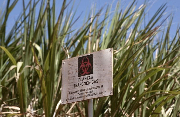 Armas transgênicas são usadas para extinguir espécies a favor do agronegócio