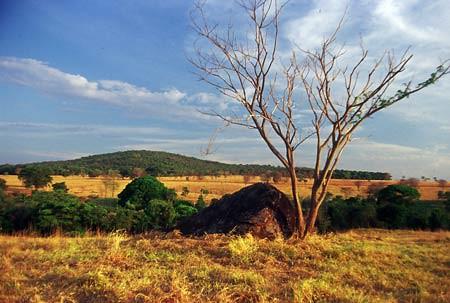 Campanha em Defesa do Cerrado será lançada nesta terça-feira, em Brasília