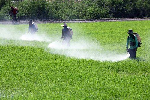 Brasil avança na liberação de agrotóxicos que matam 193 mil pessoas por ano no mundo