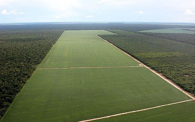 Menos de 1% das propriedades agrícolas detém quase metade da área rural no país