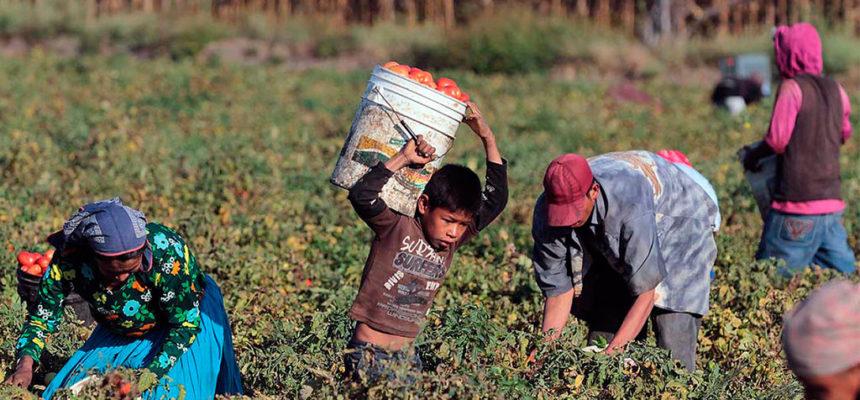 Pobreza rural atinge 60 milhões de pessoas na América Latina, diz OIT