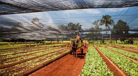 agricultura-organica-cuba-580x319.jpg