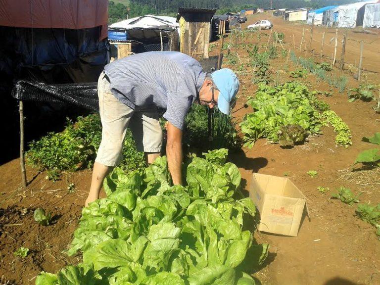 Acampamento com liminar de despejo produz comida sem veneno