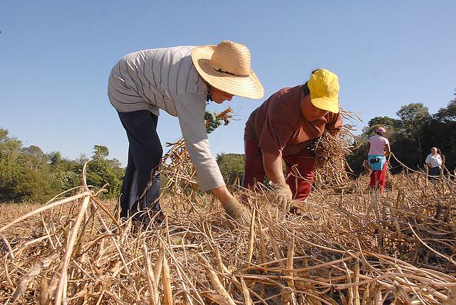 Apenas dois candidatos falam em reforma agrária no plano de governo