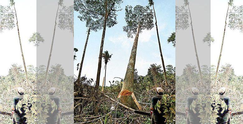 Em curso a maior ofensiva ambiental desde a ditadura