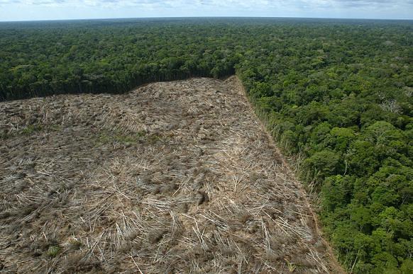 Desmatamento na Amazônia brasileira em 2016: prenúncio de um retrocesso?
