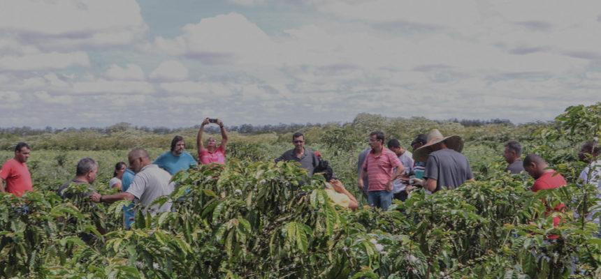Seminário debate os próximos passos da produção de café agroecológico na Bahia