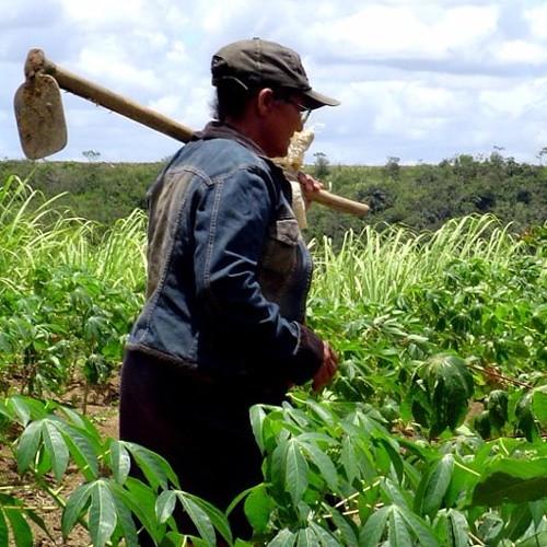 direitos previdenciários das mulheres do campo estão em risco