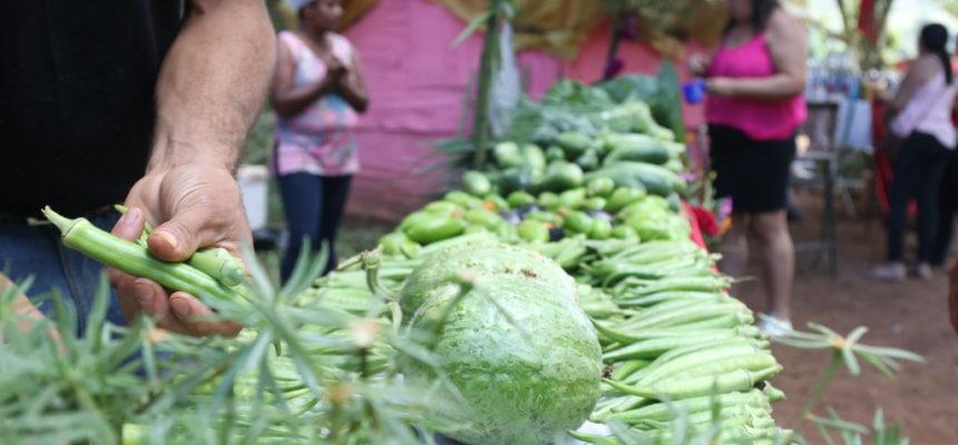 Região metropolitana produz alimentos saudáveis para Festival da Reforma Agrária de Minas Gerais
