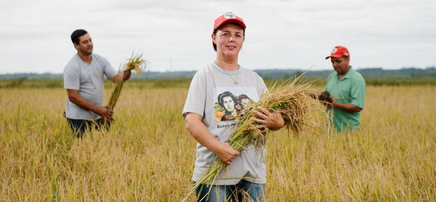 Conheça a maior produção de arroz orgânico da América Latina, do MST