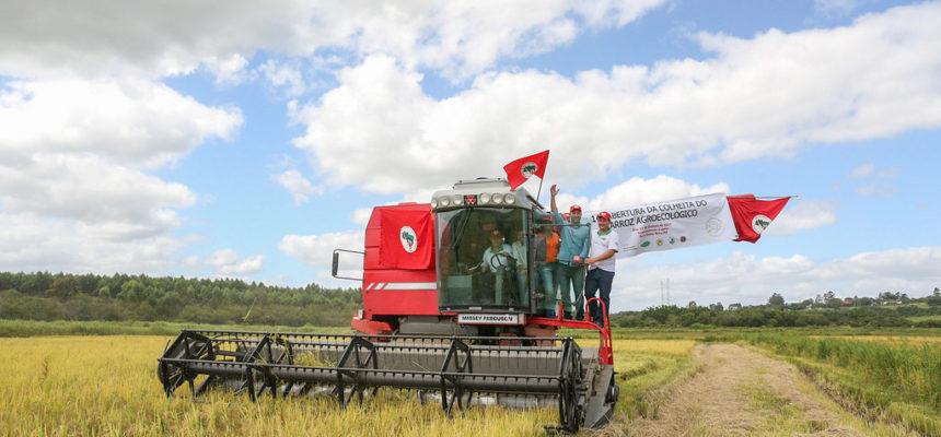 Arroz Agroecológico: abertura da colheita é marcada por expectativa da produção