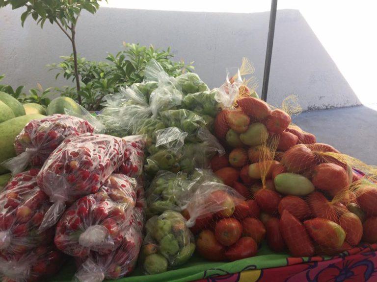MST realiza VI Feira Cultural da Reforma Agrária no Ceará