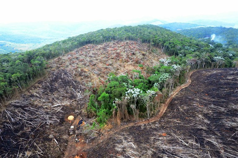 Brasil é campeão em desmatamento de florestas primárias no mundo