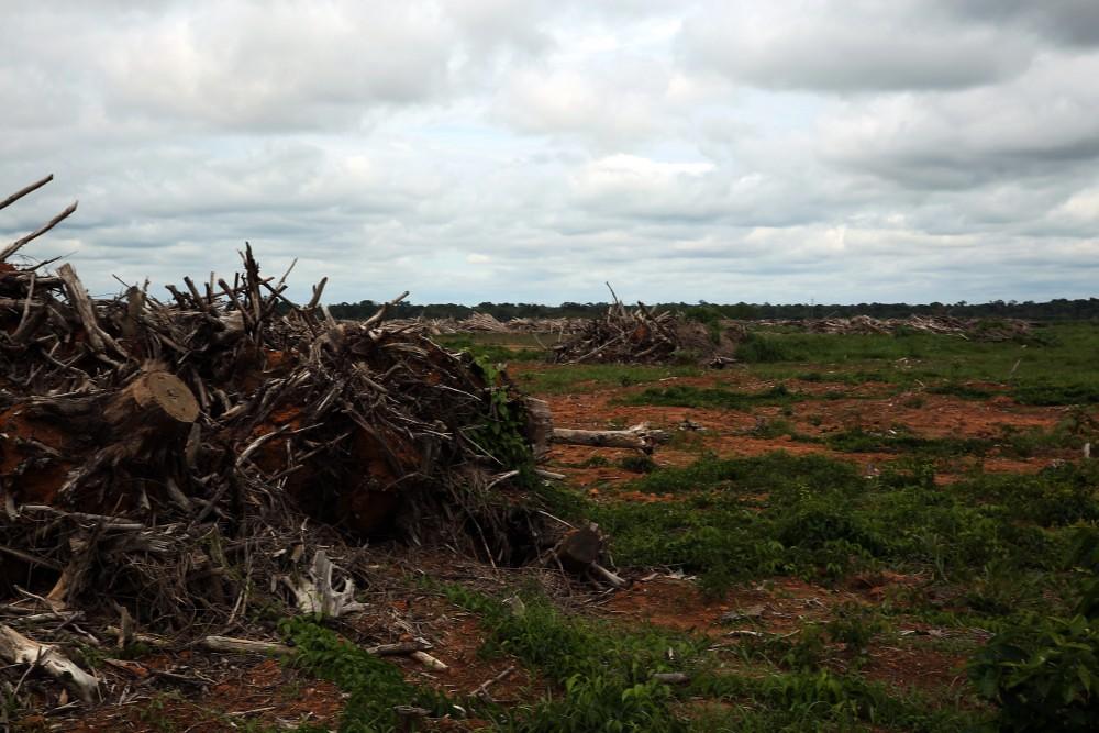 terra-agronegocio-floresta-abaixo-arrancar-as-raizes-das-arvores-derrubadas-1486998019-1000x667.jpg