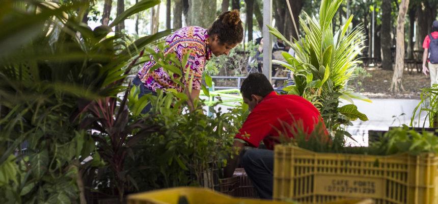 Feira de mudas e sementes estimula o cultivo de plantas e hortaliças em casa