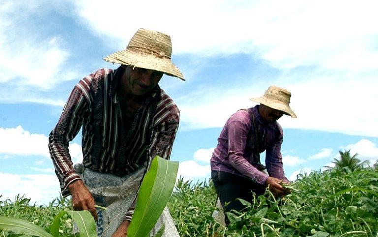 Reforma trabalhista rural quer acabar até com salário do trabalhador do campo