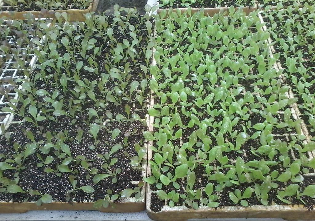 Com a conquista, a Coceargs poderá certificar mudas orgânicas. Foto Divulgaçãojpg.jpg