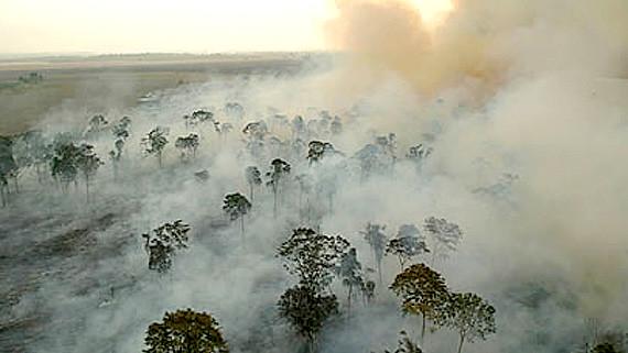 Organizações e movimentos defendem florestas brasileiras fora do mercados de carbono