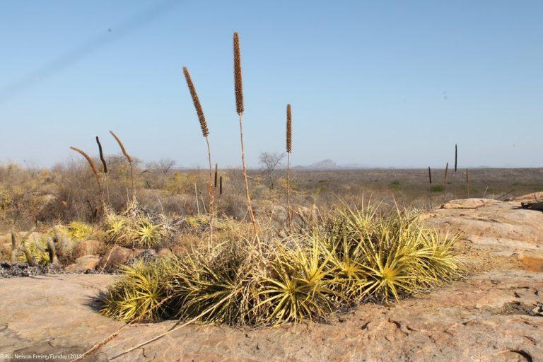 Agronegócio e madeireiros ameaçam único trecho protegido da Caatinga