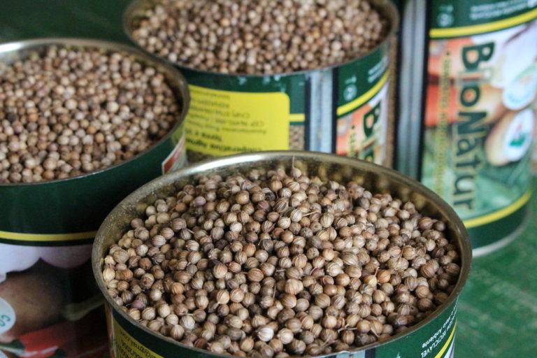Cooperativa do MST vai certificar produção de sementes e mudas orgânicas