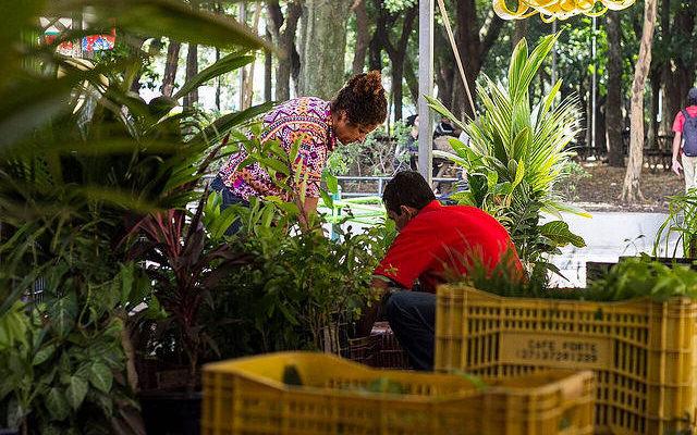 A experiência capixaba na produção de sementes crioulas e plantas medicinais